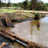 The oil continued to lift from the vegetation while the oil in the water went through bioremediation