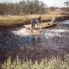 OSE II was applied to the crude oil and marsh grass in the center of the pond
